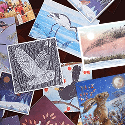 RSPB charity christmas card selection