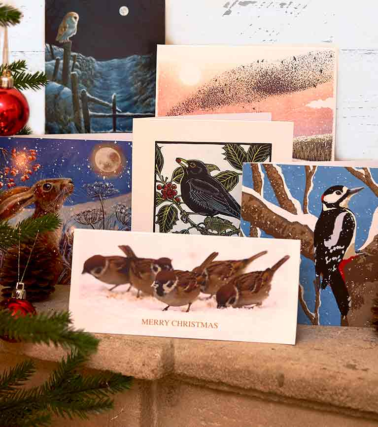 Christmas cards lifestyle shot featuring RSPB christmas cards selection