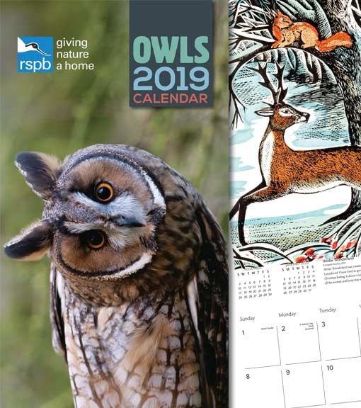 Christmas calendars and diaries lifestyle shot featuring RSPB inquisitive owl and Angela Harding calendar illustration