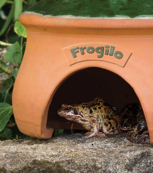 Navigate to products for Frogs from the RSPB shop