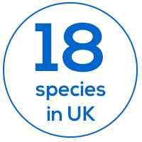 18 bat species in the UK