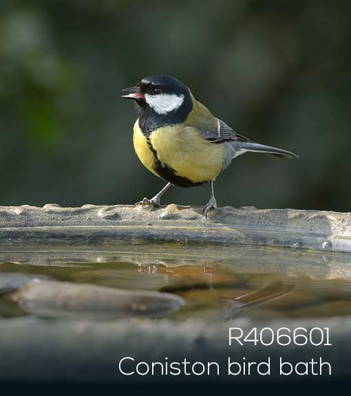 Great tit perches by a bird bath to drink or bathe - RSPB Shop Coniston bird bath
