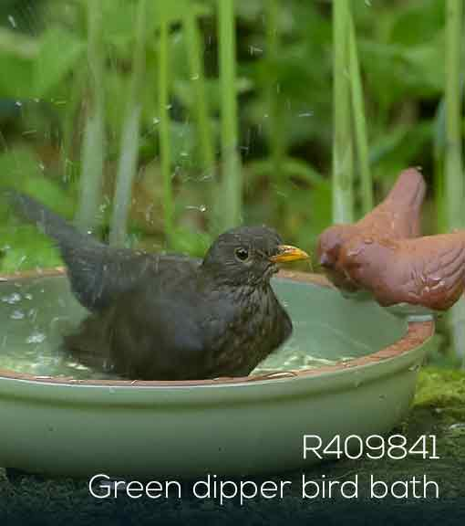Blackbird bathes in the RSPB shop Green dipper bird bath