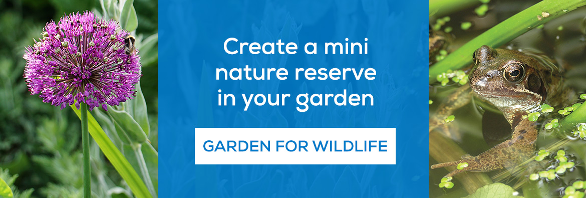 Create a mini nature reserve in your garden. Garden for wildlife now!