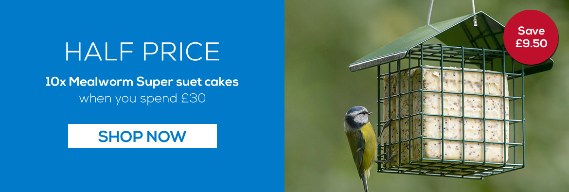 Plastic free suet cakes new in, containing garden birds' favourite ingredients