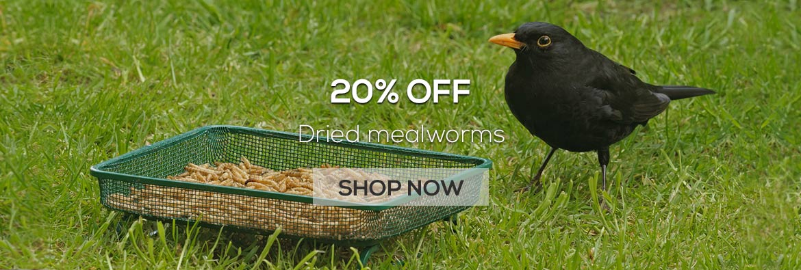 20% off dried mealworms from the RSPB online shop for a limited time