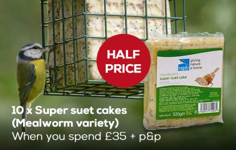Half price Mealworm super suet cakes when you spend £35 plus delivery
