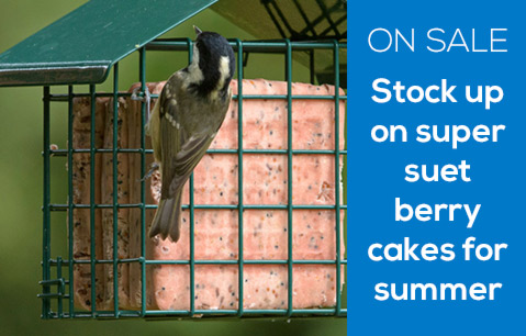 ON SALE - Stock up on super suet berry cakes for summer