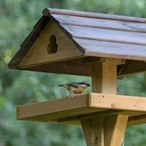 Nuthatch small bird on wooden garden bird table