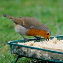 Wild bird food with robin