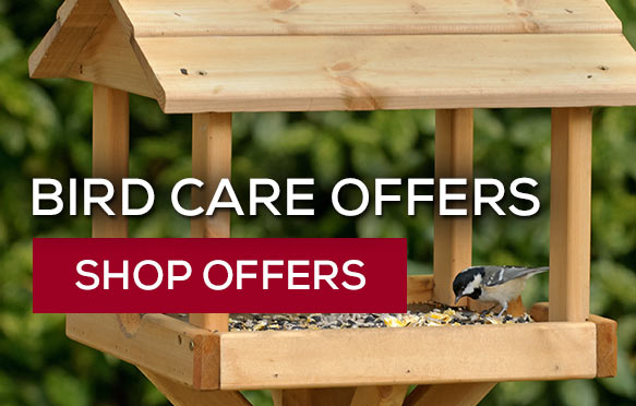 Save on bird feeders and food with these bundles. Shop now!
