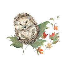 Mr Prickles Hedgehog card product photo