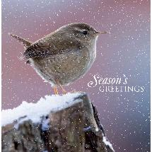 Winter wren (10 pack) product photo