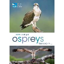 RSPB Spotlight ospreys product photo