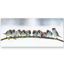 Christmas chatter RSPB charity Christmas cards - 10 pack product photo