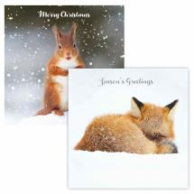 Christmas foraging RSPB charity Christmas cards - 10 pack, 2 designs product photo