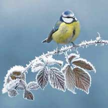 First frost RSPB charity Christmas cards - 10 pack product photo