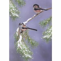 Follow me, friend RSPB charity Christmas cards - 10 pack product photo