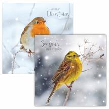 Frosty perch RSPB charity Christmas cards - 10 pack, 2 designs product photo