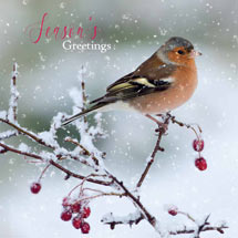 Frosty perch RSPB charity Christmas cards - 10 pack product photo