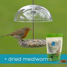 I love robins feeder & dried mealworms product photo