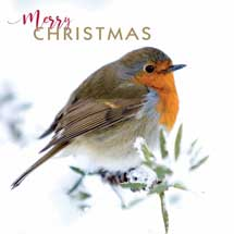 Merry Christmas robin RSPB charity Christmas cards - 10 pack product photo