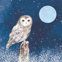 Midnight owl RSPB charity Christmas cards - 10 pack product photo