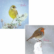Snowy perch duo RSPB charity Christmas cards - 10 pack product photo