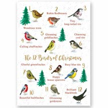 The 12 birds of Christmas RSPB charity Christmas cards - 10 pack product photo
