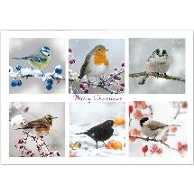 Winter chorus RSPB charity Christmas cards - 10 pack product photo