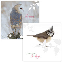 Winter perching RSPB charity Christmas cards - 10 pack product photo