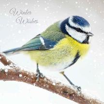 Winter watch RSPB charity Christmas cards - 10 pack product photo