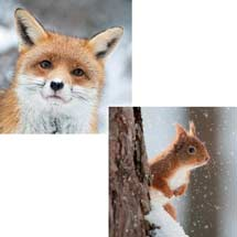 Winter wildlife RSPB charity Christmas cards - 10 pack product photo