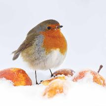 Winter's feast RSPB charity Christmas cards - 10 pack product photo