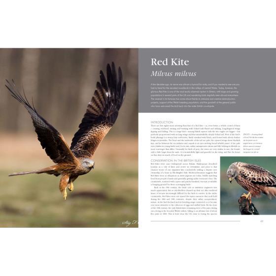 Rspb British Birds Of Prey Book Rspb Shop