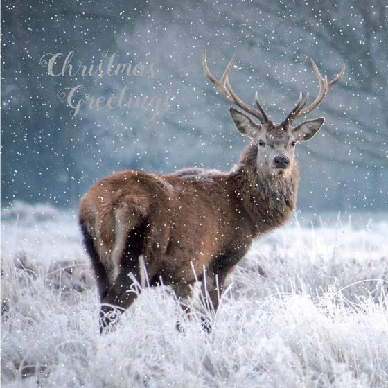 RSPB Snowy stag Christmas cards (10 pack) product photo Default L