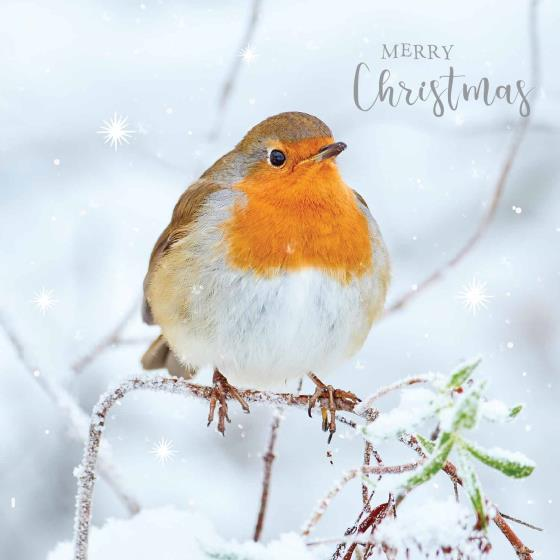 Frosty perch RSPB charity Christmas cards - 10 pack, 2 designs product photo Side View -  - additional image 3 L