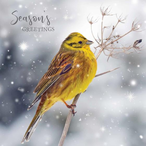Frosty perch RSPB charity Christmas cards - 10 pack, 2 designs product photo Back View -  - additional image 2 L