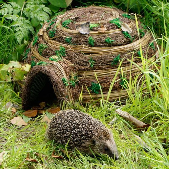 Image result for hedgehog shelter