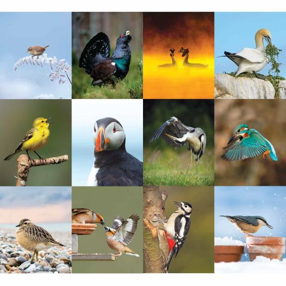 RSPB Birds calendar 2020 product photo Back View -  - additional image 2 L