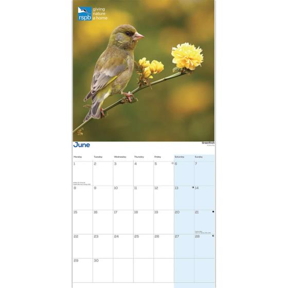 RSPB Garden birds calendar 2020 product photo Side View -  - additional image 3 L