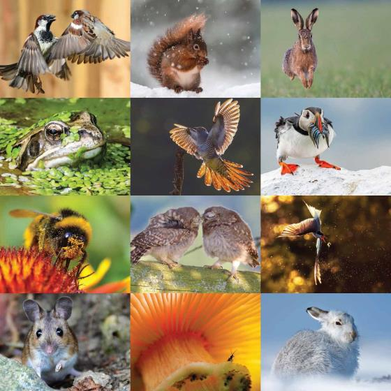 RSPB Inspiring nature calendar 2020 product photo Back View -  - additional image 2 L