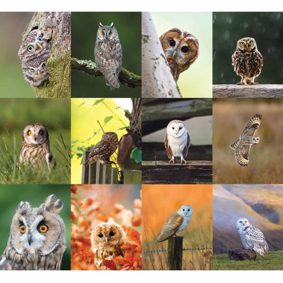 RSPB Owls calendar 2020 product photo Back View -  - additional image 2 L
