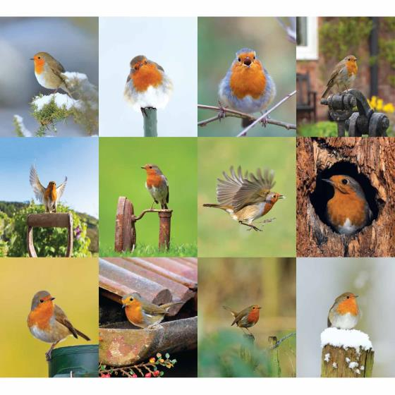 RSPB Robins 2020 slim wall calendar product photo Back View -  - additional image 2 L