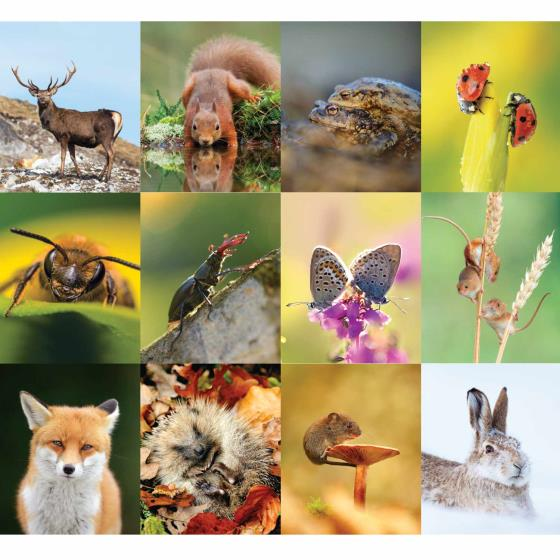 RSPB Wildlife calendar 2020 product photo Back View -  - additional image 2 L