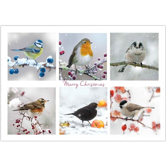 Winter chorus RSPB charity Christmas cards - 10 pack product photo Default L