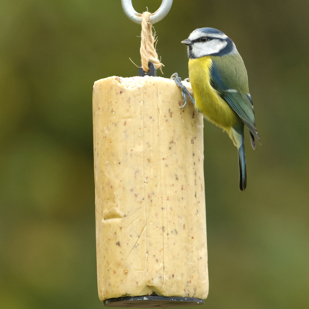 RSPB Super suet hanging cakes, sunflower hearts product photo
