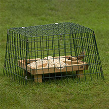 RSPB Ground feeding sanctuary narrow mesh - New design product photo