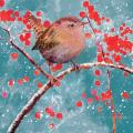 Berry Christmas RSPB charity Christmas cards - 10 pack product photo