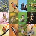 RSPB Garden birds calendar 2020 product photo Back View -  - additional image 2 T